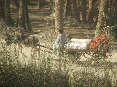 エジプト旅行 401.jpg